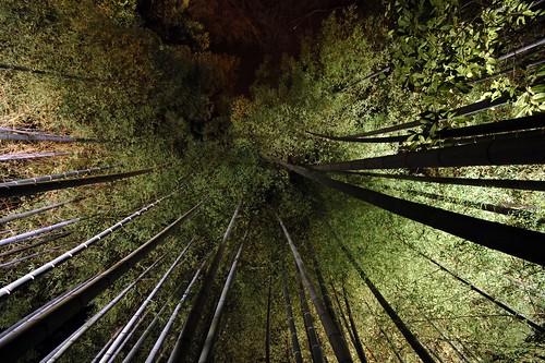 [フリー画像素材] 自然風景, 森林, 竹・竹林, 風景 - 日本 ID:201210160400