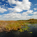 Anhinga Trail, Everglades by Dave 2x