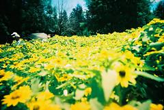 hide in flowers
