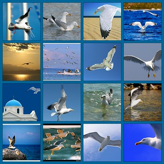 greek seagulls... my small group