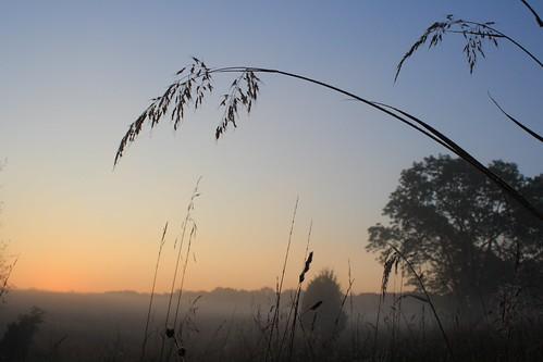 morning grass fog sunrise dawn virginia early va manassas manassasva