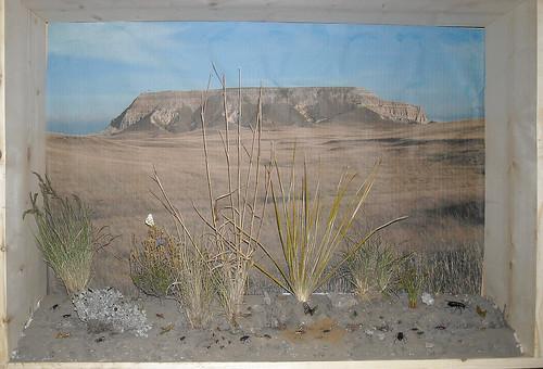 Grassland Diorama