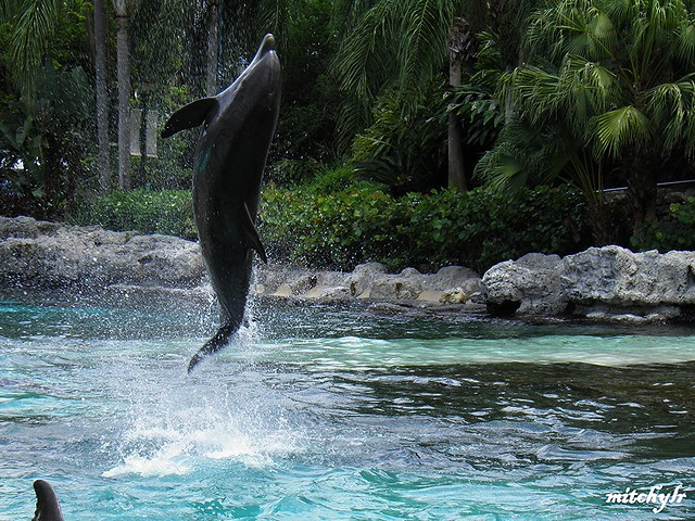 Leaping Dolphins 2