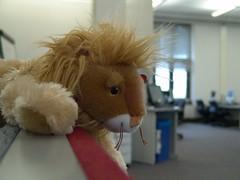 Secret Life of Stuffed Lions
