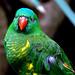Parrot, Taronga Zoo by maximnz