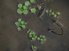 Water and clover