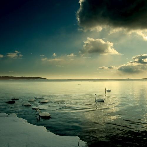 sea sky seascape color water clouds photoshop suomi finland dark square swan helsinki nikon scenery searchthebest 100v10f 2009 gettyimages lauttasaari d300 500x500 aod idream abigfave ok6 ollik 100commentgroup 20090328 hallglorymorningwaysep2011