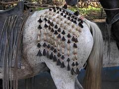 Caballo con decoración - Horse with horse hair decoration; Jinotega, Nicaragua