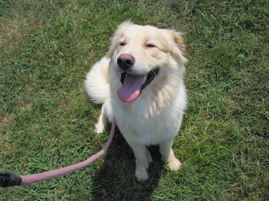 Smiling Dog Treats Furbo