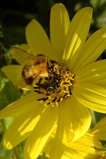 Bee a-feeding