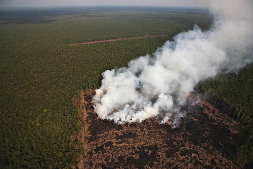Smoke from man made forest fires in the RAPP concession in Giam Siak Kecil area to clear land for palm oil plantations