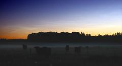 Noctilucent clouds & Cows