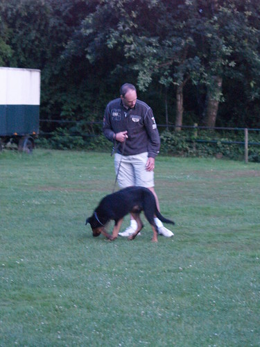 Not Getting Anywhere Training Your Dog? Read These Helpful Tips 2