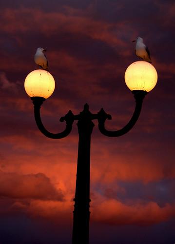 light sunset bird minnesota canon post seagull gull lamppost mn duluth duluthmn canalpark clould