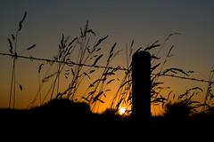 Coucher de soleil / IMG_3504