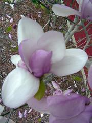 blossom(0.0), flower(1.0), purple(1.0), plant(1.0), lilac(1.0), flora(1.0), pink(1.0), petal(1.0),