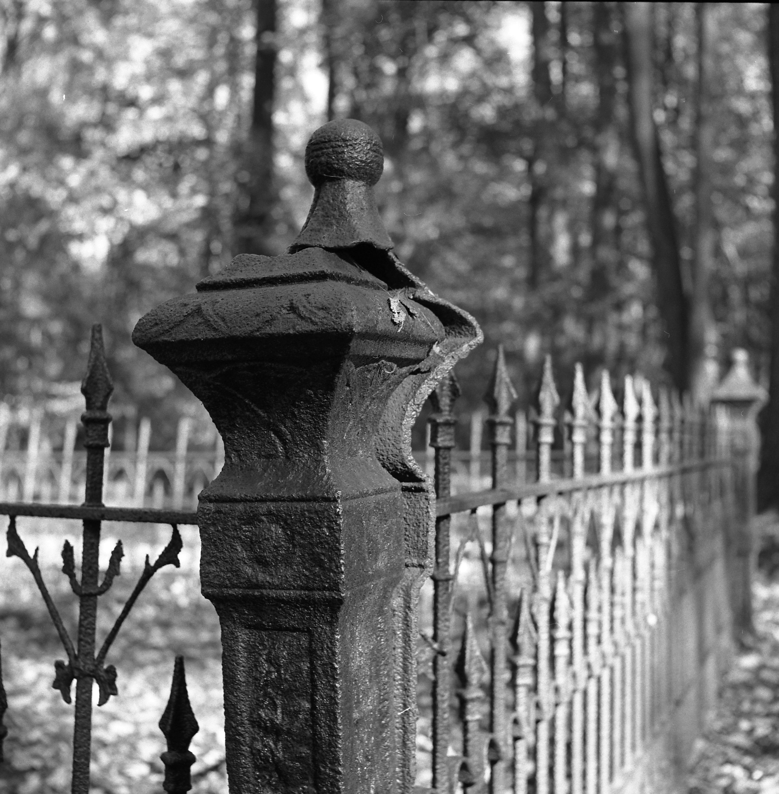 Cemetery fence black and white