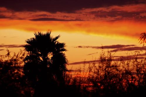 sunset sky canon palmtree backyardsunset canon30d