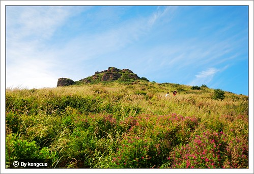 通往阳台山顶峰的鲜花从