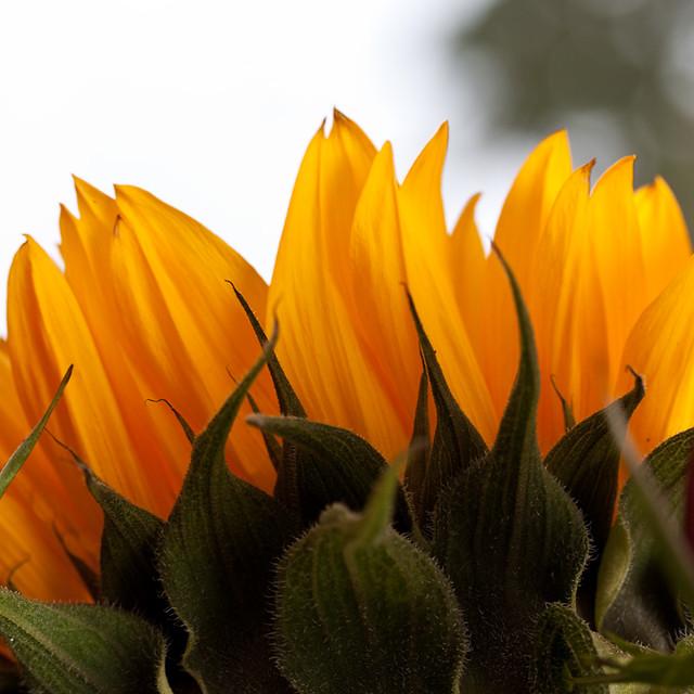 Sonne & Flower