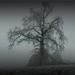 icy tree by tammye*