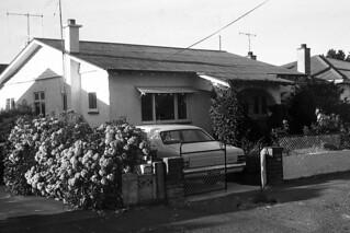 39 Dahlia Street, Palmerston North, 1973