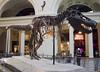 Sue - Field Museum by ipodman715