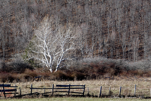 trees winter friends explore westvirginia bartow shadowandlight pocahontascounty kartpostal