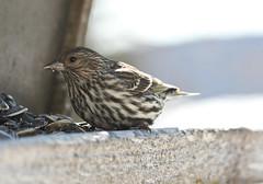 wren(0.0), ortolan bunting(0.0), emberizidae(0.0), house sparrow(0.0), brambling(0.0), blackbird(0.0), animal(1.0), sparrow(1.0), perching bird(1.0), fauna(1.0), finch(1.0), close-up(1.0), beak(1.0), bird(1.0), lark(1.0), wildlife(1.0),