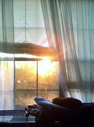 sleeping window mobile cat sunrise bedroom curtains goodmorning iphone sheers