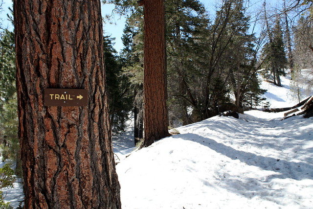 3358327147 41588a0c88 z Top 5 Southern California Winter Snow Hikes