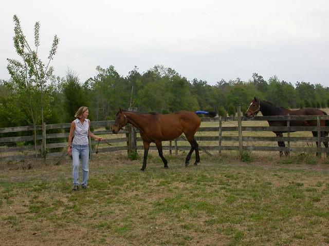 Breeding Horses (2004)