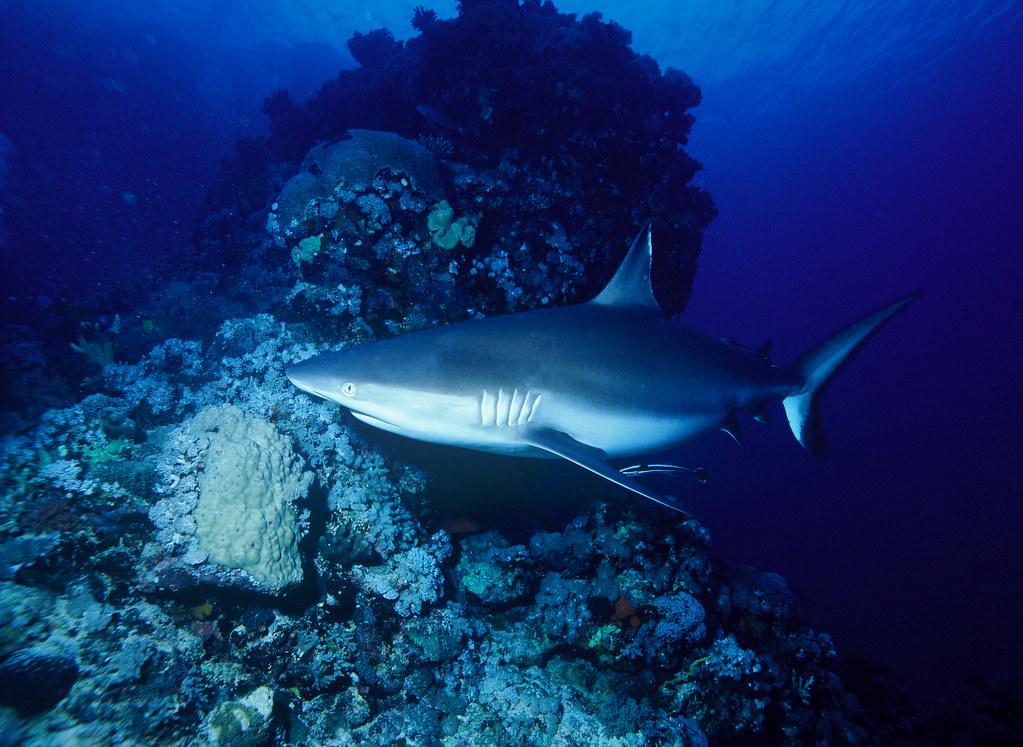 Angarosh reef