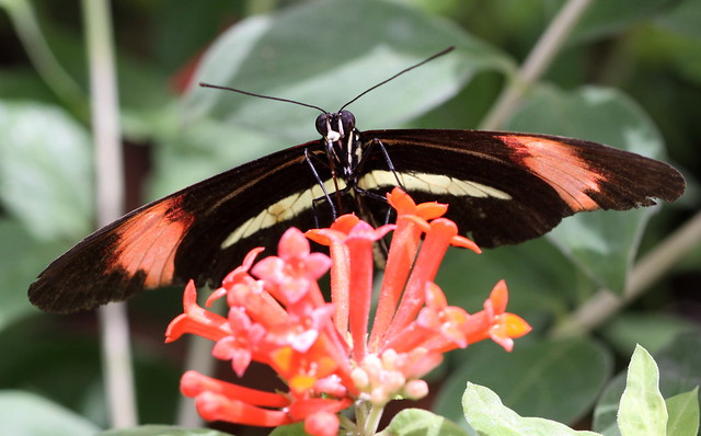 Butterfly at brookside gardens flickr photo sharing - Photo