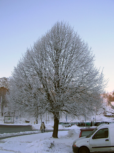 Lime tree frost 060131