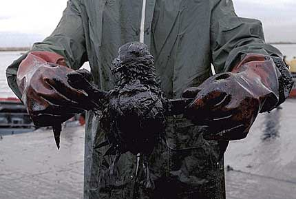 Oil Spill Victim