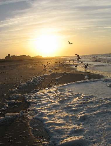 morning favorite sun seagulls beach nature beautiful birds silhouette vertical sunrise landscape dawn nc sand focus waves shadows gulls flight wing northcarolina shore foam carolina seafoam shorebirds oakisland caswellbeach caswellbeachnc sunrisecaswellbeach