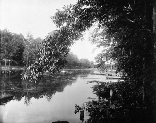 A photograph of Patterson's Creek in the Glebe, 1892
