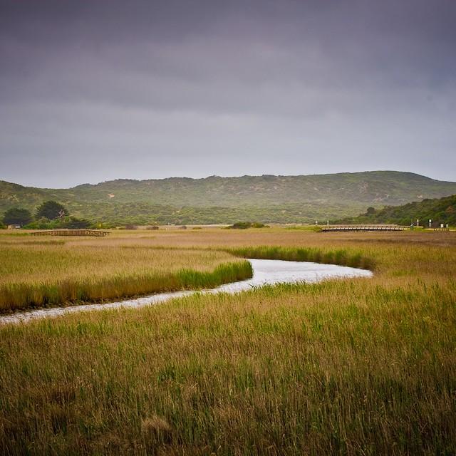 Grass River Landscape