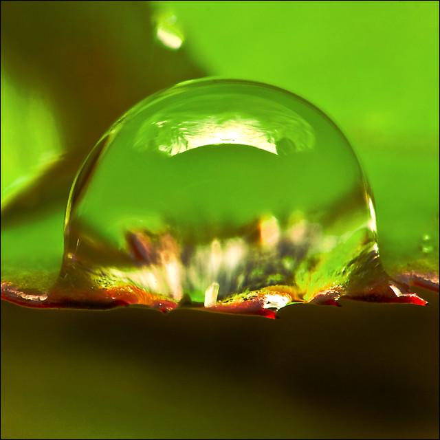 ~ H²O Drop~