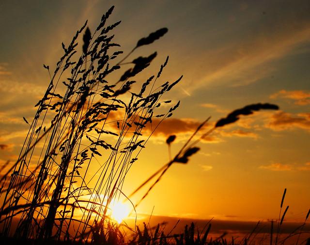 Kentish Sunset