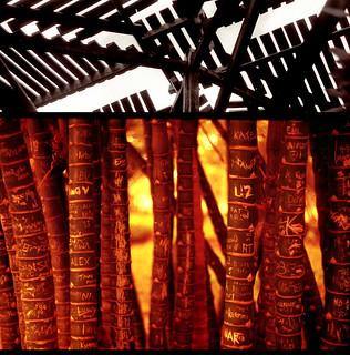 bamboo promises