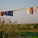 Amish Clothes Line