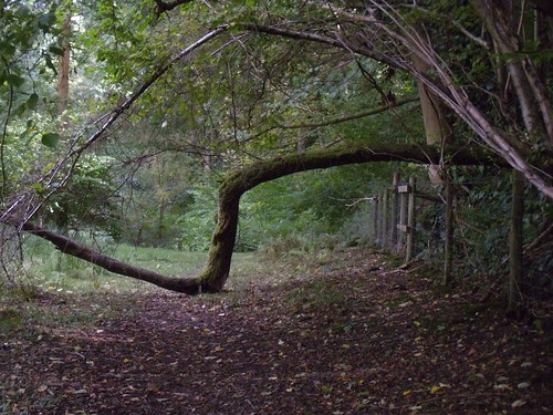 Zigzag branch