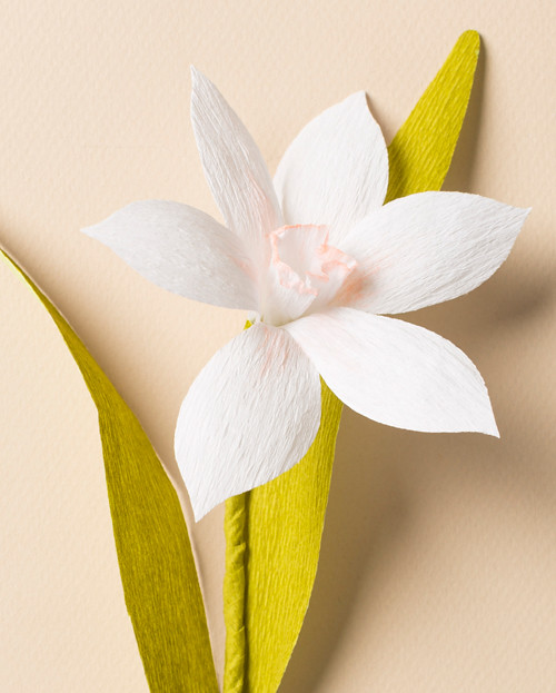 crepe paper narcissus tutorial