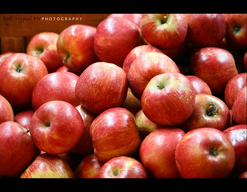 canon tennessee apples rebelxt canonrebelxt applebarn kamote seviervilletennessee rebelxti eos400d ronmiguel kamoteus2003 kamoteus thechallengefactory burabog kaantabe91 100commentgroup