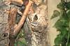 """<a href=""""http://www.flickr.com/photos/derflitzer/3234985877/"""">Photo of Varanus similis by Andreas Pott</a>"""