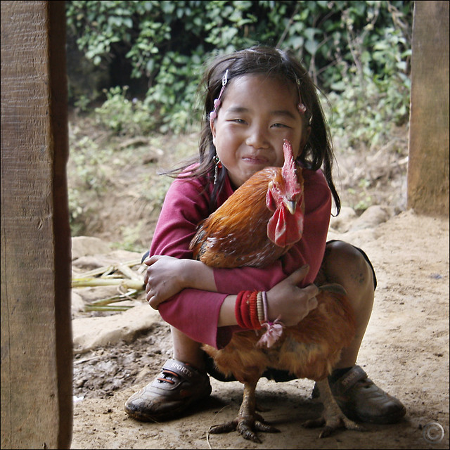 Hmong guardian Rooster
