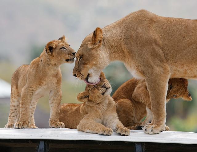 Oshana & Cubs_F9P5673