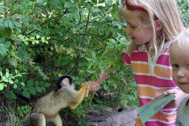 Apenheul - Squirrel Monkey Grabbing Olivia 2